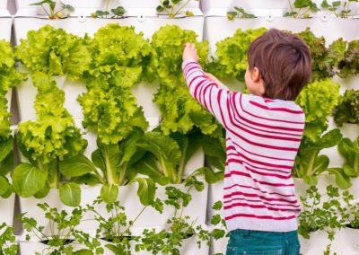 Vertikaalne aiandus (2)